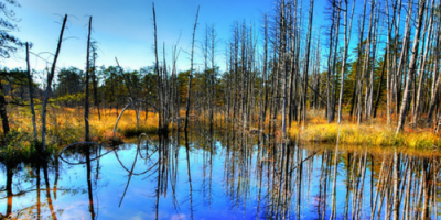 Tell Governor Murphy to make new appointments to the Pinelands Commission!