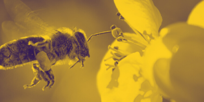 Urge Assembly Speaker Coughlin and Assemblyman Houghtaling to Pass the Neonics Bill